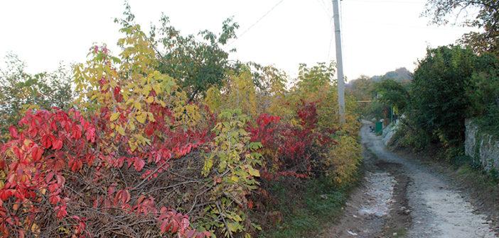 Утопая в листве по колено, снова осень стоит у двора… (фоторепортаж)