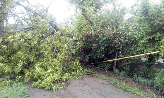 В Балте на газовую трубу и проезжую часть дороги рухнуло дерево